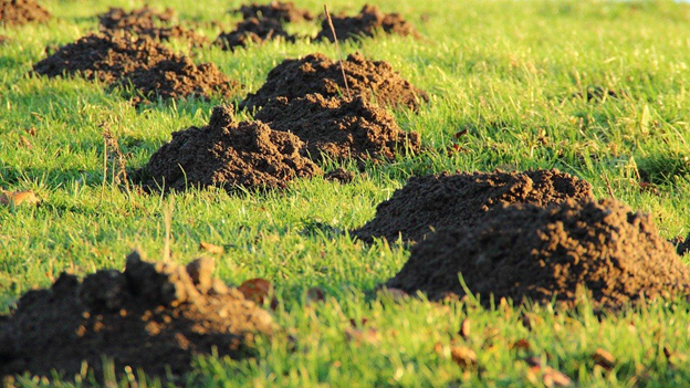 How To Tell If I Need a Lawn Fertilizer Service